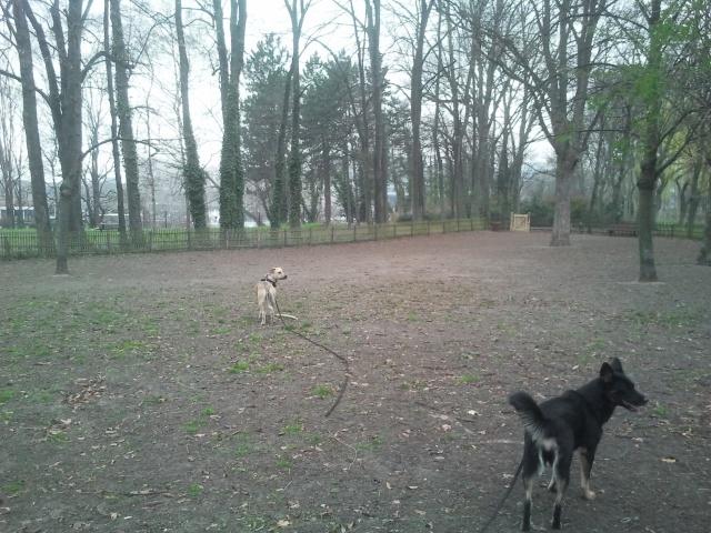 Lila, adorable chienne croisée, née en octobre 2011 781991caniparc1