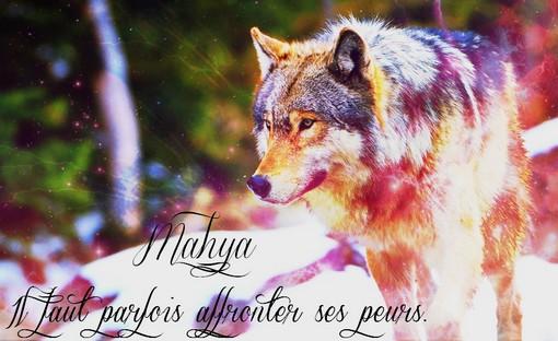 Les images des loups 783754signamahya
