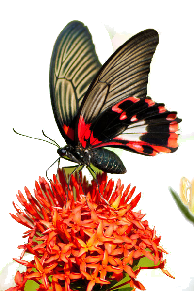 Tubes Papillon 784083Melgibson4ge13