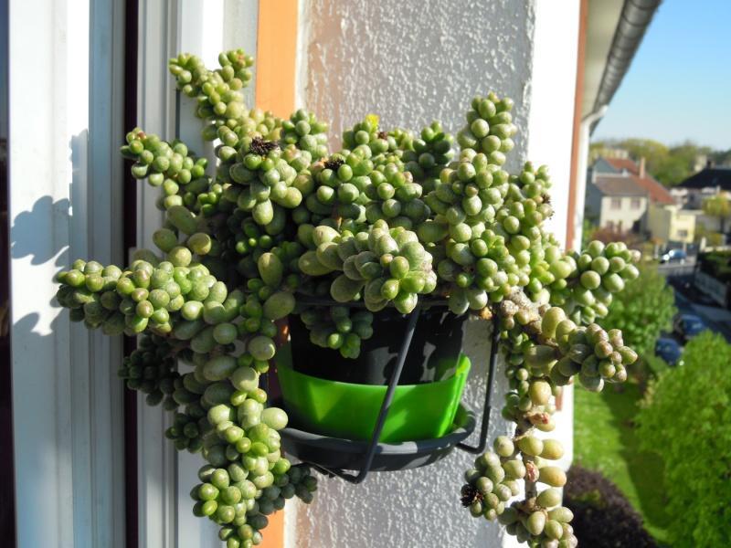 fraicheur et rayon de soleil sur les rebords de fenêtres... 784901hernandezii18