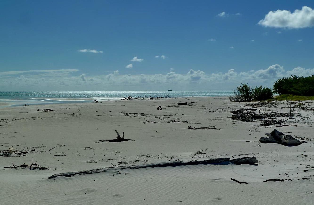 [Campagne] Iles éparses du canal du Mozambique - Page 13 785885P1060162