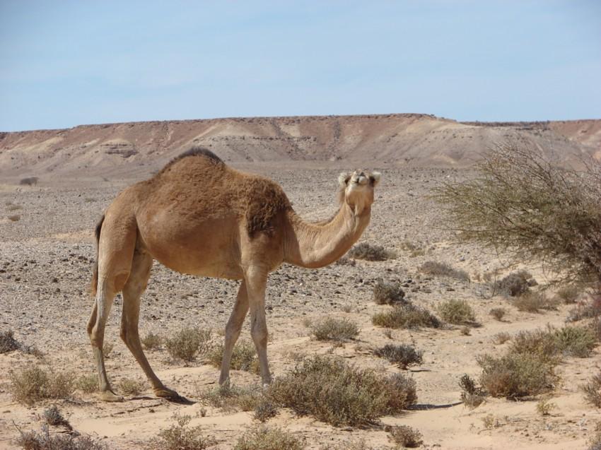 Le Grand Sud du Maroc - II 786745040