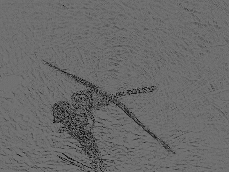 Jeux des insectes fossilisés 2 788973Cordulgastreannel