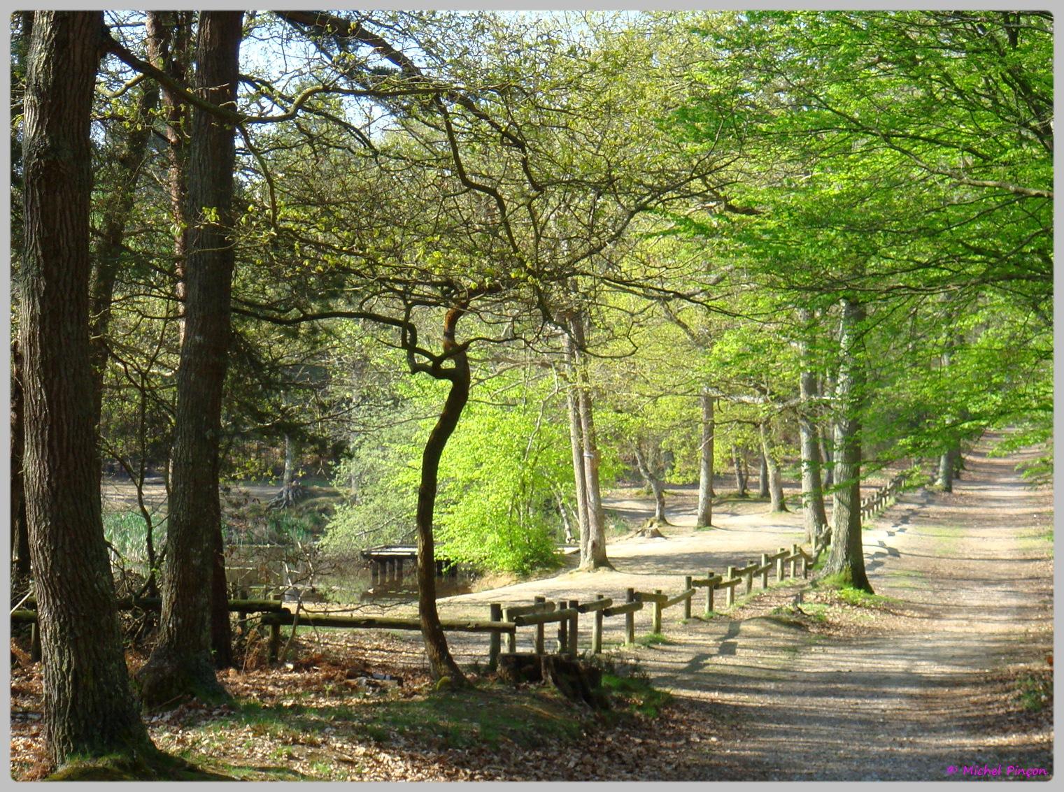 [fil ouvert] la forêt dans tous ses états - Page 13 794035DSC012644