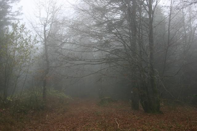 Dans la brume éléctrique sans gibier à l'horizon... 795540IMG4580