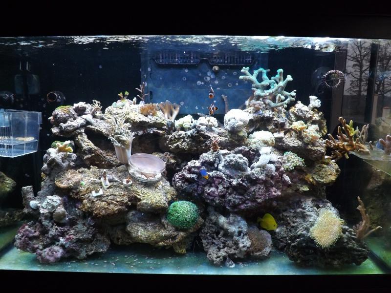 Astra47's Reef >Rsm250 noir - Page 2 796233DSCF1717