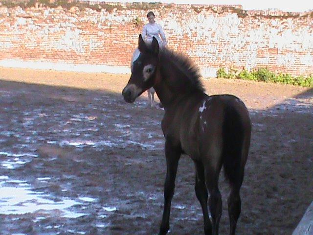 Conquistador des Bardenas mon petit monstre de 2012. 7973512mois5