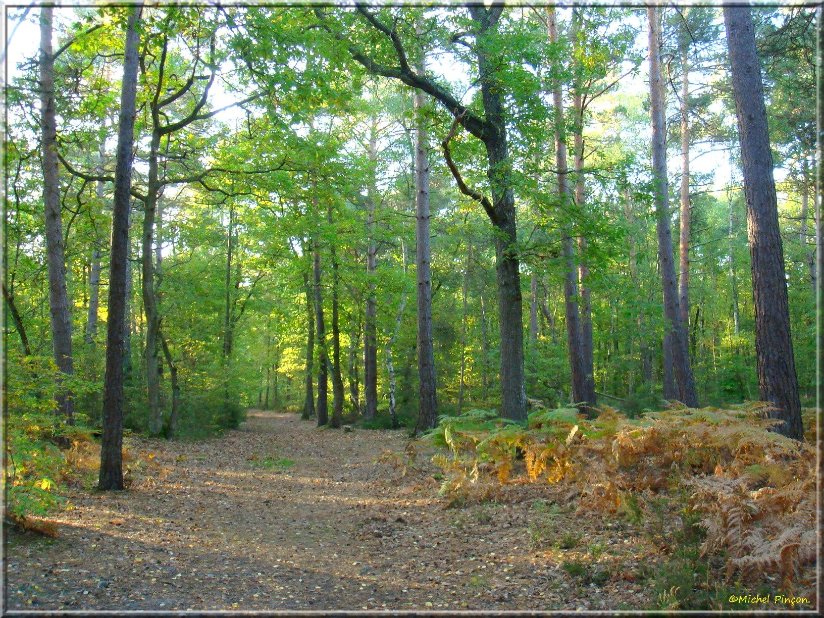 [fil ouvert] la forêt dans tous ses états - Page 15 797358DSC013968