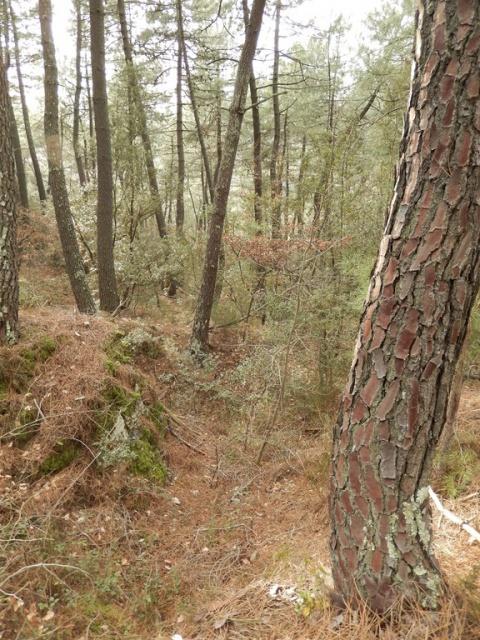 Petite ballade à travers bois... 798128DSCN0072Copier