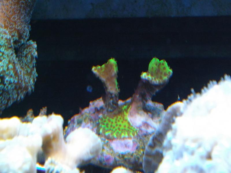 Astra47's Reef >Rsm250 noir - Page 2 800936DSCF1735