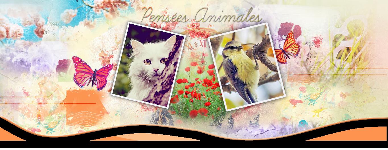 Site sur la communication animale 802554Bannire