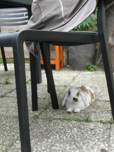 Nina, lapine bélier, née en aout 2011 - Page 7 803222P1130652