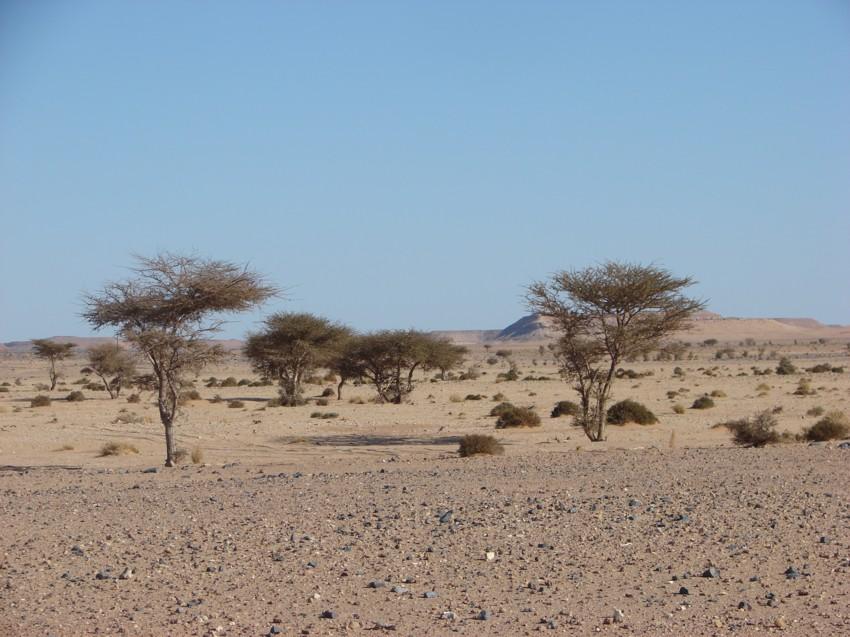 Le Grand Sud du Maroc - II 804108105