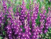 Les fleurs (ou plantes ) contre le cancer. 80610320160410075349