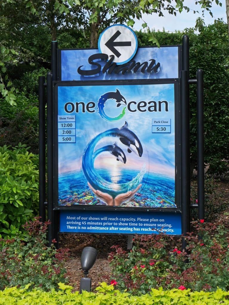 Une lune de miel à Orlando, septembre/octobre 2015 [WDW - Universal Resort - Seaworld Resort] - Page 9 806324P1060222