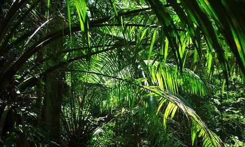 Jungle du Nord