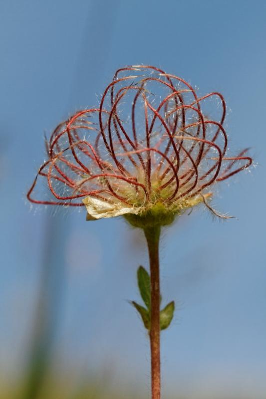 Flore et insectes de Vanoise 807041LelacBlanc049DxO800x600