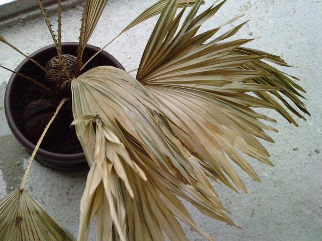 Comment s'appelle cette plante et que faire à ces feuilles! 808821P08051213000002