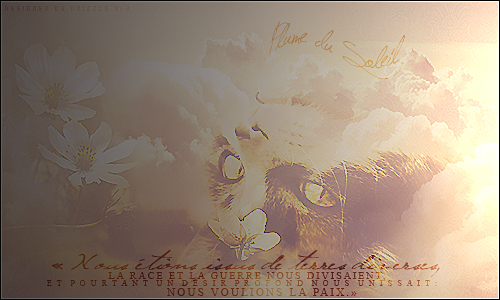 Sunny Art ~ 809221Plumedusoleil