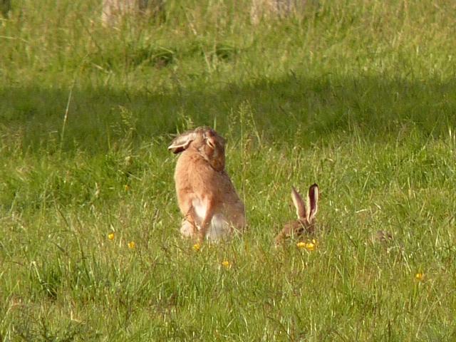 Belles photos d'animaux c'est ici !  - Page 7 810759P1120001