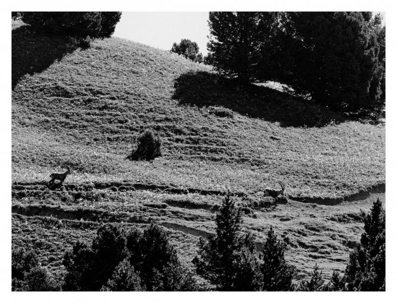 La faune du Pas de l'Aiguille 811605FJ8I4298web