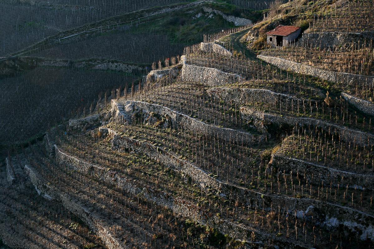 Les vignes du seigneur  812158Crozehermitage5129