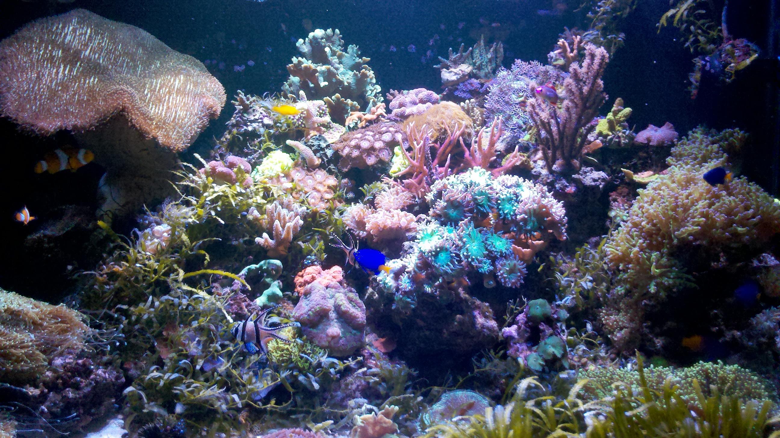 Aquarium récifal 360 litres 814373931