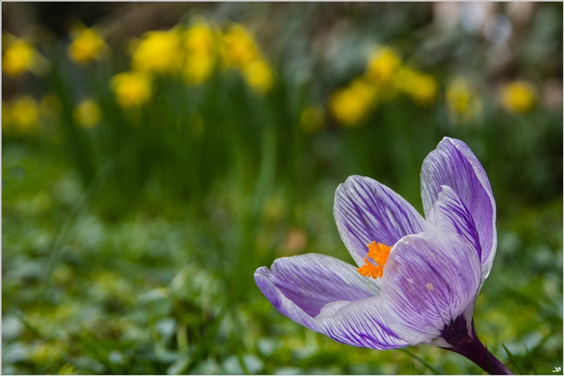 Moulin à Tan : petite fleur ... lalala lalala 814492LR4P3140031