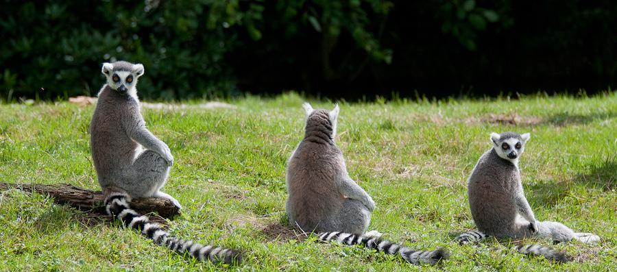 Sortie au Zoo d'Olmen (à côté de Hasselt) le samedi 14 juillet : Les photos - Page 2 814710CRI4656