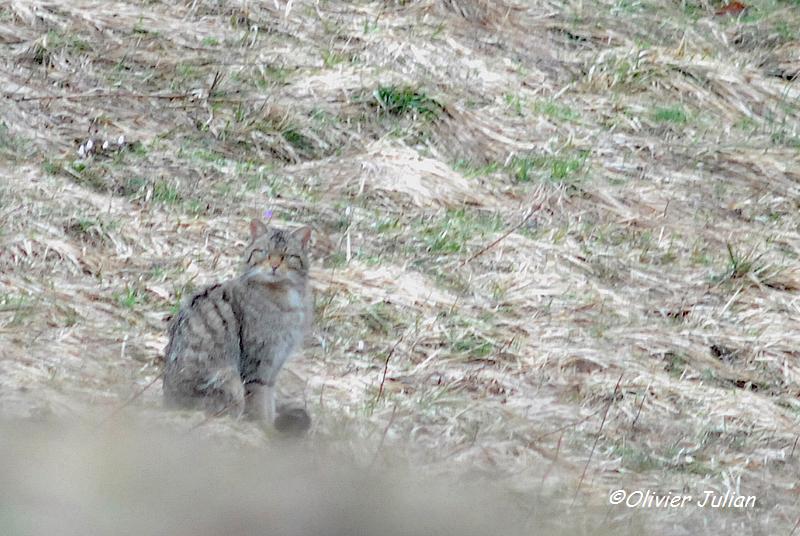 Quelques photos animalières.. 816666DSC3926b