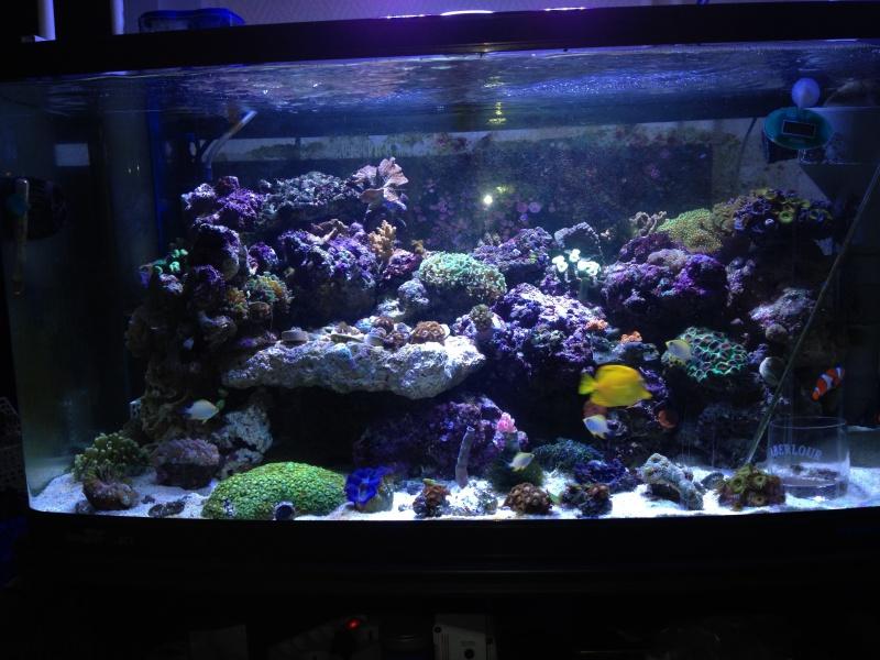 Le reef de Moule92 817425IMG0735