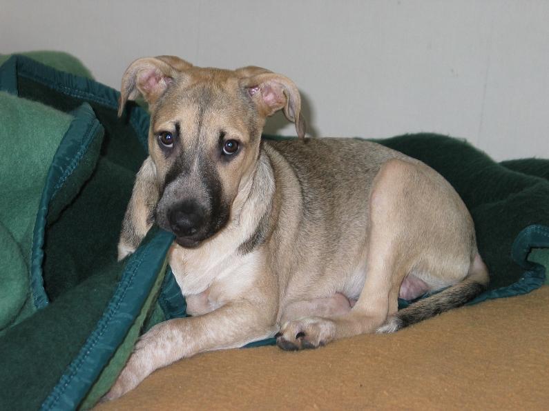 Lila, adorable chienne croisée, née en octobre 2011 818854IMG8072