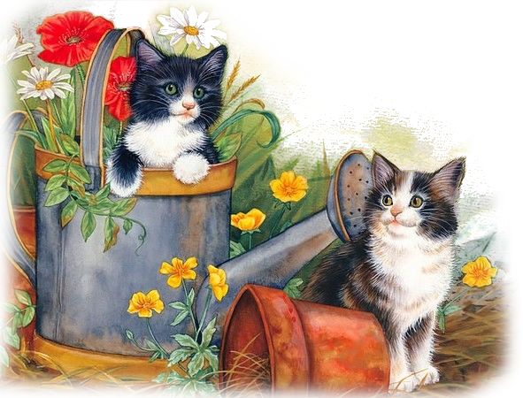 Mes tubages Chats 820002TubMel31