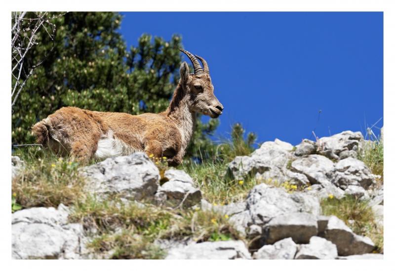 La faune du Pas de l'Aiguille 820649FJ8I4284DXO