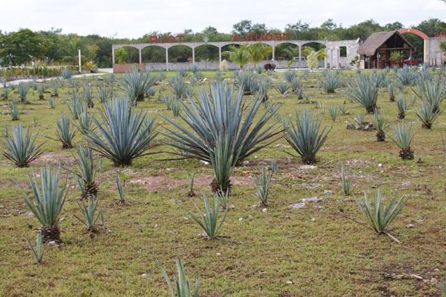 Petit voyage à Cozumel 821891cozumel02