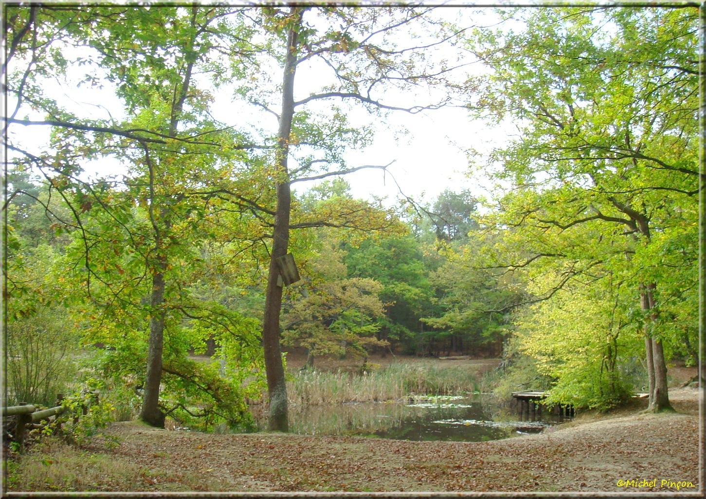 [fil ouvert] la forêt dans tous ses états - Page 15 823998DSC013977