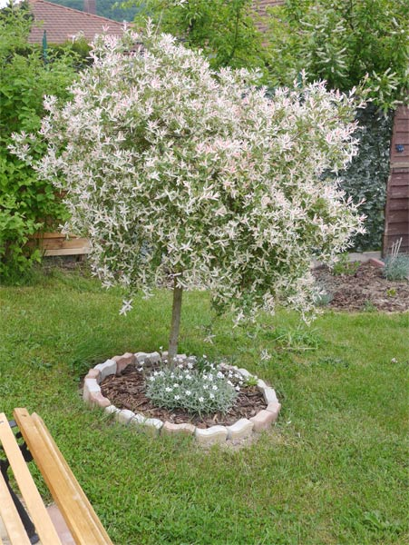Mon jardin 2016. 824644P1150738w