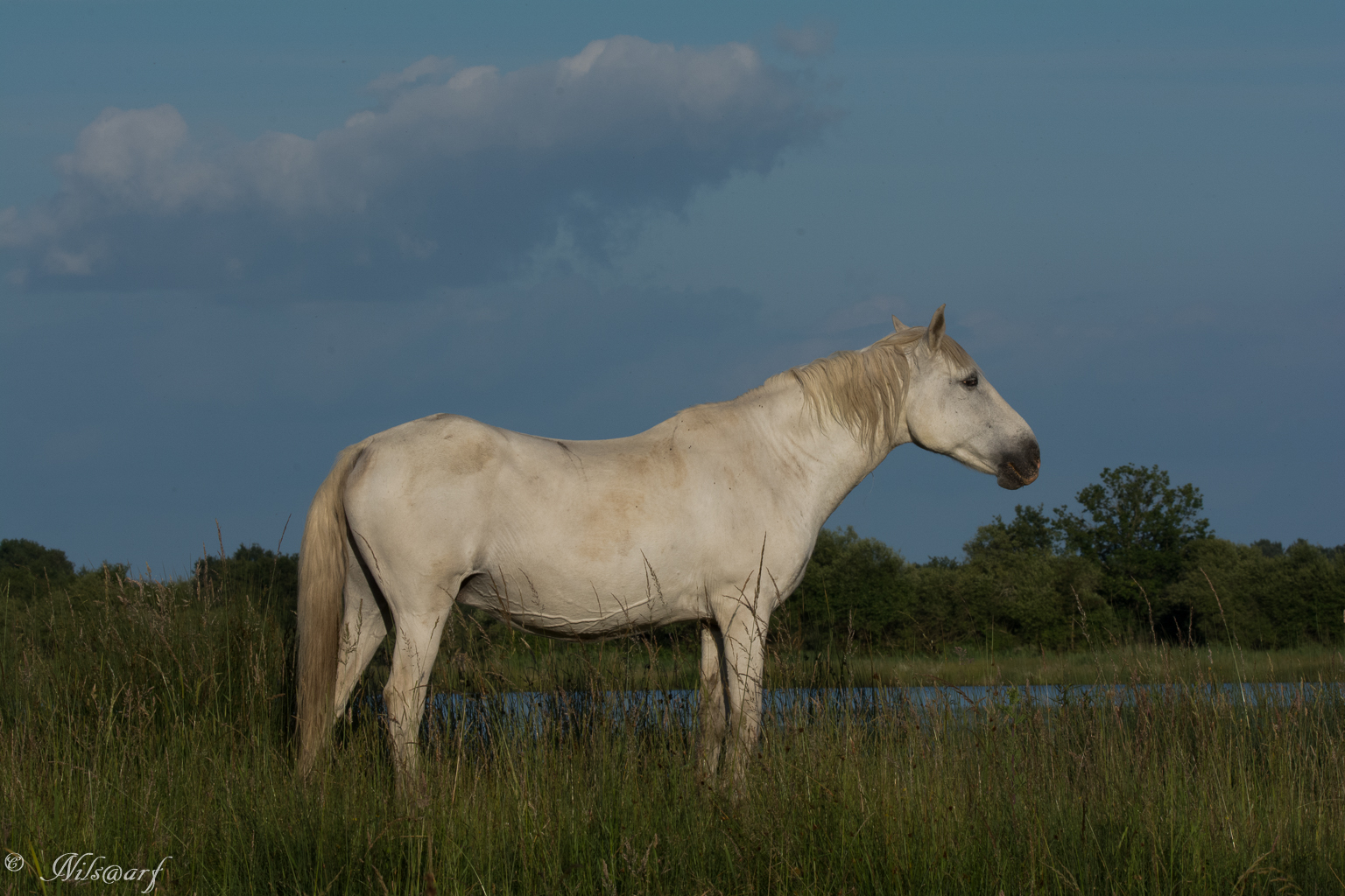 [Fil - Ouvert ] Chevaux - Page 6 834666labrenne20161021