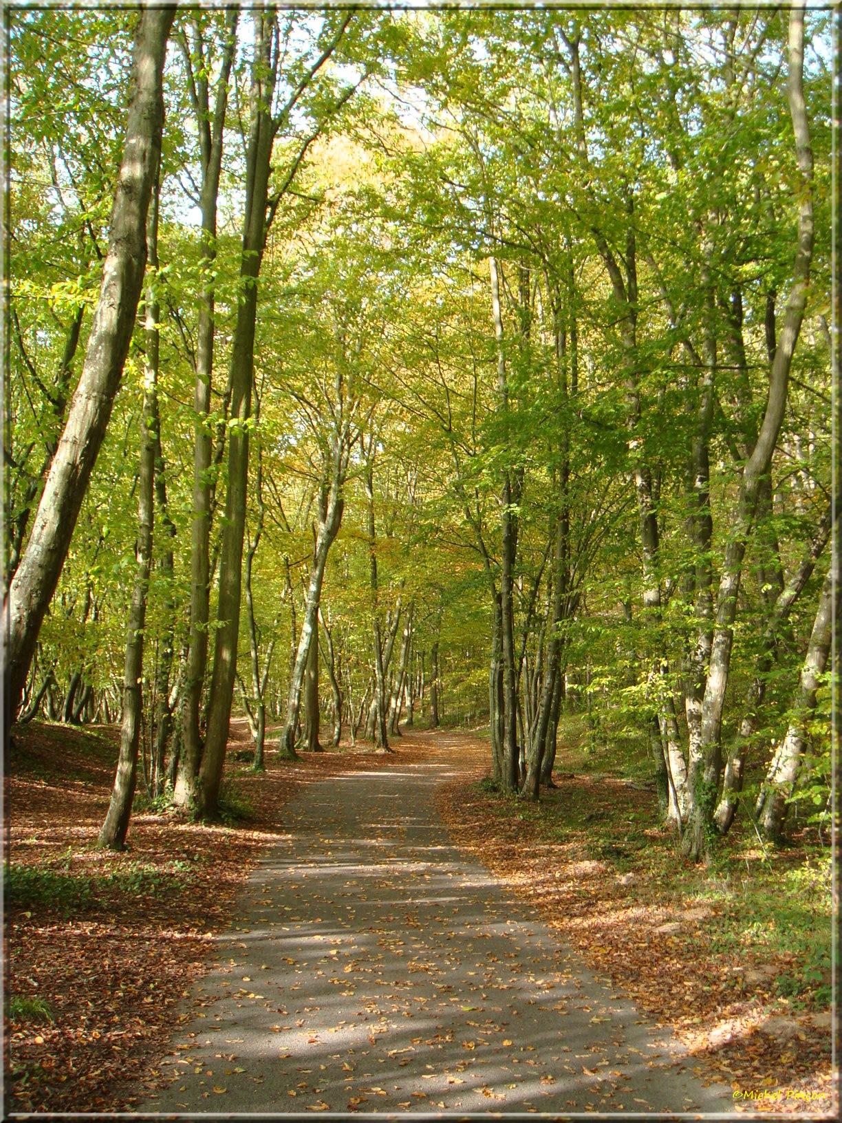 [fil ouvert] la forêt dans tous ses états - Page 15 834854DSC014038