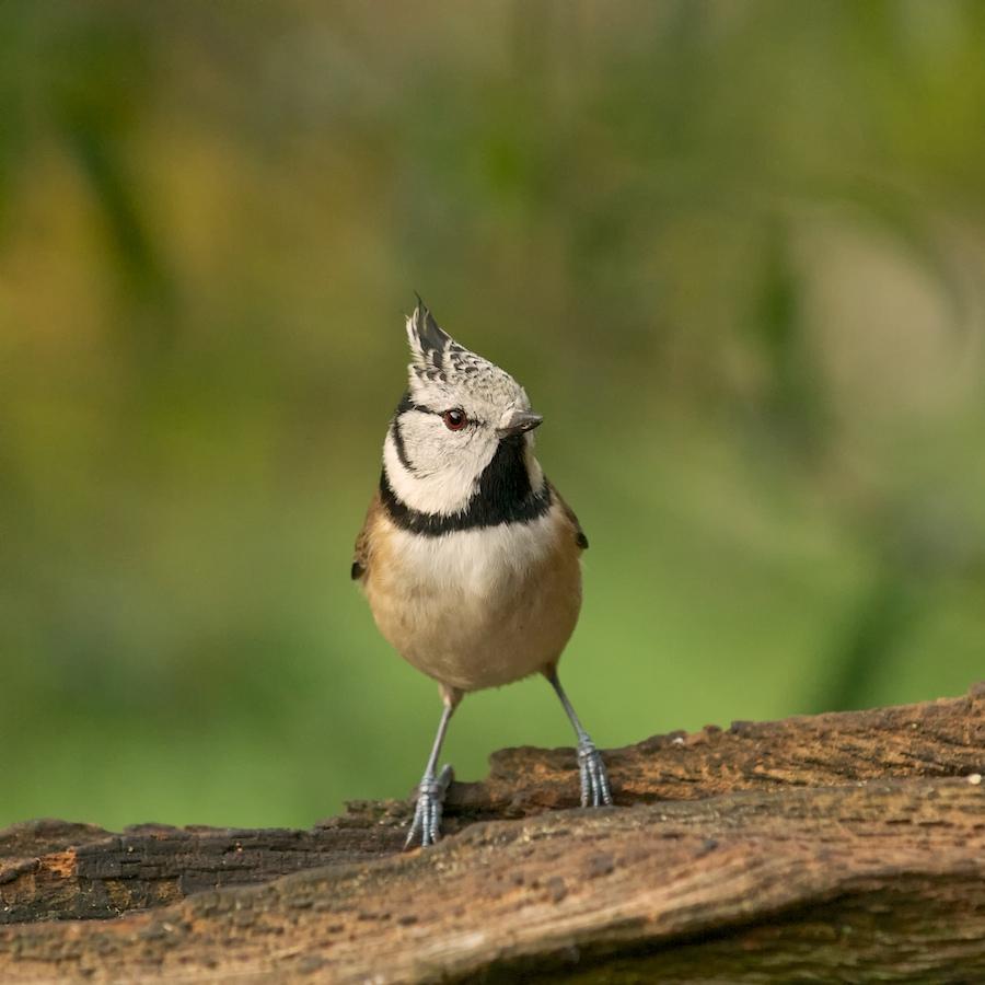 Oiseaux de mon jardin(Denis), 836378DSC3249