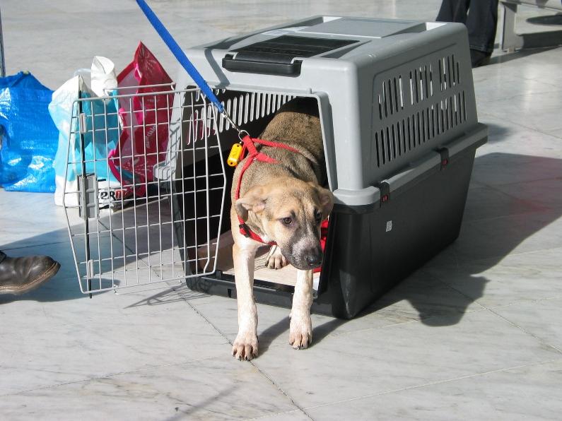 Lila, adorable chienne croisée, née en octobre 2011 839484IMG8050