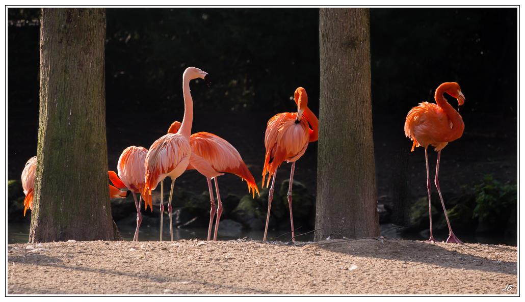 Zoo de Beauval : les oiseaux 839500LR53P1130970