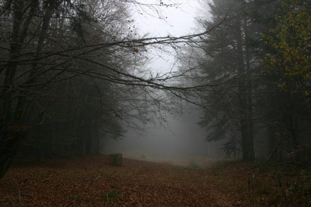 Dans la brume éléctrique sans gibier à l'horizon... 839734IMG4579