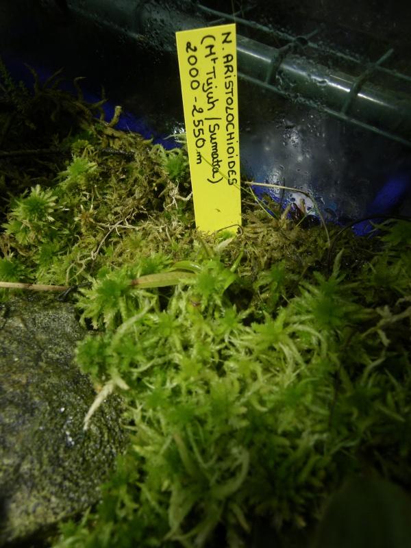 Mon terrarium highland 840210IMGP1836