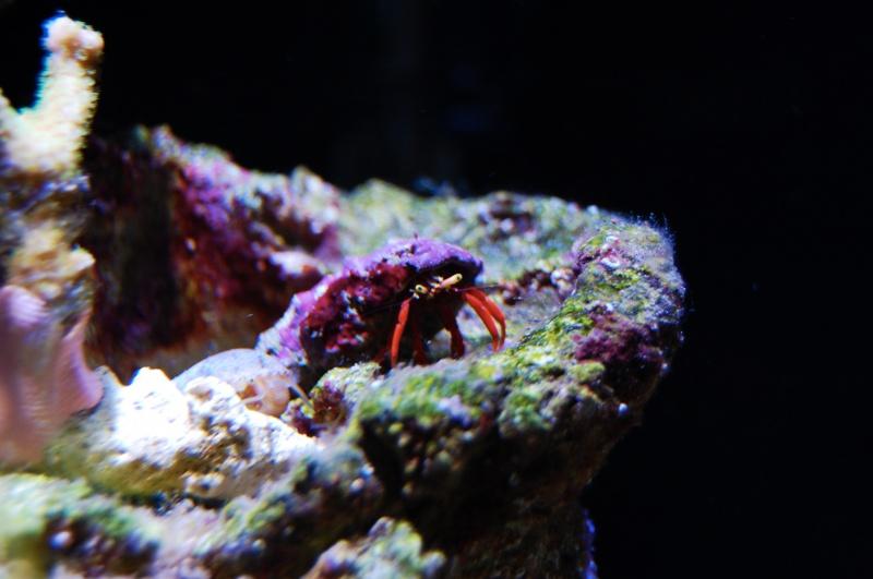 Nano Reef 30l 844246DSC0222mo
