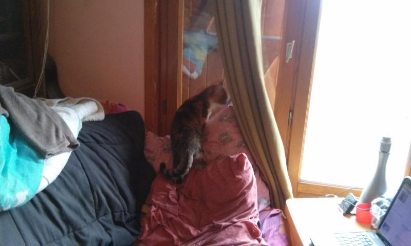 DUCHESSE - chatte femelle, née 2011/2012, borgne - (PASCANI) - adoptée par Chantal Pascal (dpt 63) - Page 4 8483032460