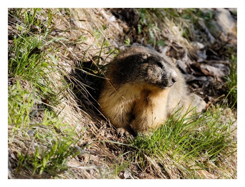La faune du Pas de l'Aiguille 854246FJ8I4248DXO