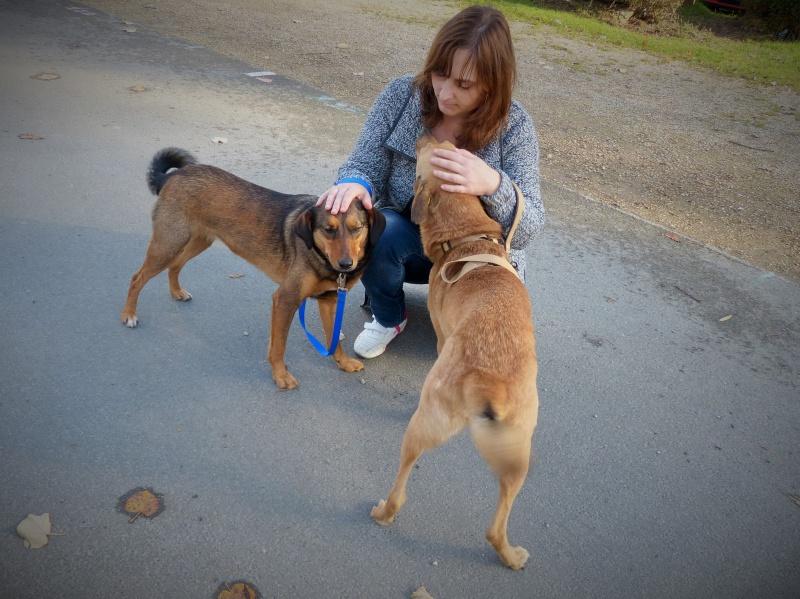 Tzupy, chien de notre quartier, mâle très sociable, né en 2009. 856788P1130408