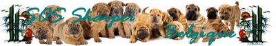 créer un forum : Belgium Shar Pei 859278Sanstitre400x67