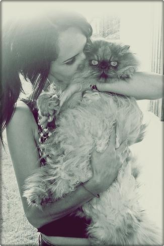 Je vous présente mon chien et mon chat ^^ 8618852
